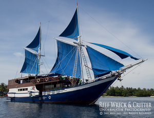 Live Aboard Diving Raja Ampat