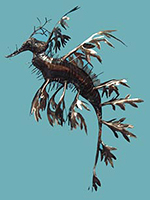 Leafy Sea Dragon - Metal Art by Aquariart