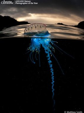 Australian Geographic ANZANG Nature Photographer of the Year 2014